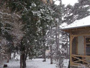 konyvtar udvar, havas fenyves